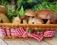 Миниатюра к статье Чем полезны лесные грибы для здоровья человека -  грибные секреты