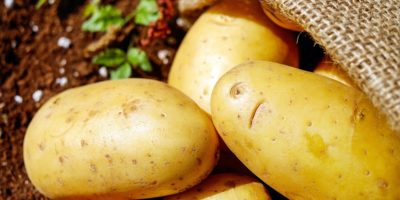 Миниатюра к статье Чем полезен картофель для человека – лечебные свойства и применение