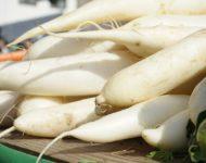 Миниатюра к статье Чем полезна японская редька дайкон и как  ее правильно готовить?