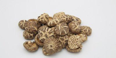 Миниатюра к статье Лечебный гриб шиитаке – секреты эффективного применения для здоровья