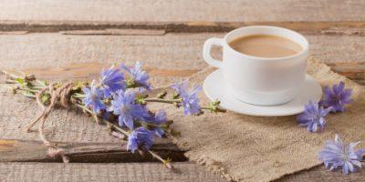 Миниатюра к статье Цикорий растворимый – полезные свойства и противопоказания