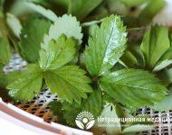 Миниатюра к статье Листья земляники - полезные свойства и способы их применения